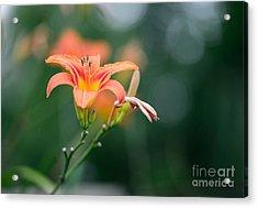 Beautiful Flower Background. Amazing Acrylic Print