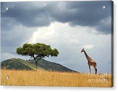 Beautiful Landscape With Nobody Tree Acrylic Print