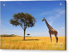 Beautiful Landscape With Tree And Acrylic Print