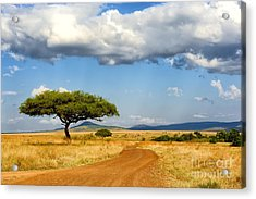 Beautiful Landscape With Tree In Africa Acrylic Print