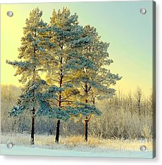 Beautiful Landscape With Winter Forest Acrylic Print by Deserg