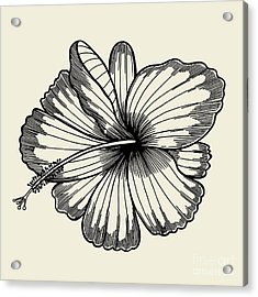 Beautiful Lily Painted In A Graphic Acrylic Print