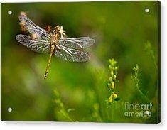 Beautiful Nature Scene With Common Acrylic Print