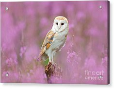 Beautiful Nature Scene With Owl And Acrylic Print