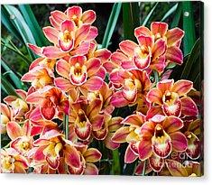 Beautiful Orchid - Phalaenopsis Acrylic Print