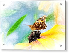 Beautiful Painted Lady Butterfly Acrylic Print