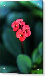 Beautiful Summer Flowers Acrylic Print
