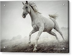 Acrylic Print featuring the photograph Beautiful White Horse Running In Mist by Dimitar Hristov