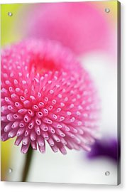 Beauty In  Nature Acrylic Print by Andrew Dernie