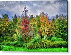 Acrylic Print featuring the photograph Beauty In The Fall Forest by Lynn Bauer