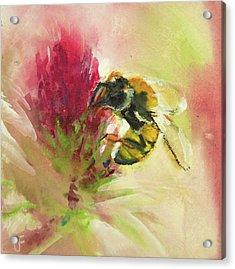Bee On Clover Acrylic Print