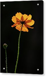 Acrylic Print featuring the photograph Behind Light And Shadow by Dale Kincaid