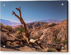 Behold, A Dead Tree Acrylic Print