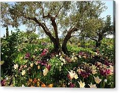 Beneath The Olive Tree, Marnes, Spain Acrylic Print by Josie Elias