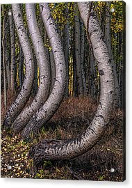 Bent Out Of Shape Acrylic Print