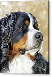 Acrylic Print featuring the mixed media Bernese Old Gold by Donna Mulley