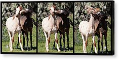 Best Friends Forever Acrylic Print