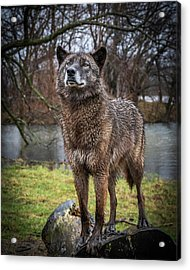 Best Of Show Pose Acrylic Print