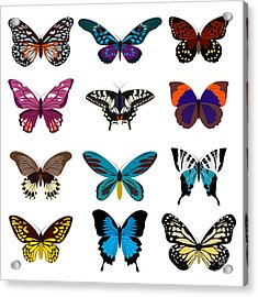 Big Collection Butterfly Of Colorful Acrylic Print