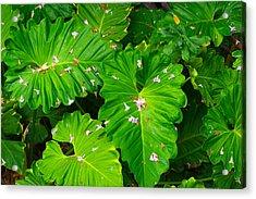 Big Green Leaves Acrylic Print