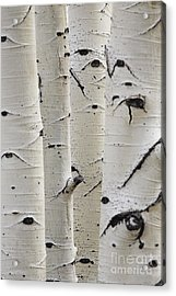 Birch Trees In A Row Close-up Of Trunks Acrylic Print
