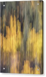 Birch Trees In The Fall  Acrylic Print by K Pegg