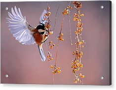 Acrylic Print featuring the photograph Bird Eating On The Fly by Top Wallpapers