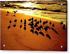 Bird Shadows Acrylic Print