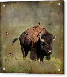 Bison And Friends Acrylic Print