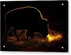 Bison Breath Acrylic Print