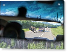 Bison In Cars Rear View Mirror Acrylic Print