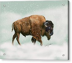 Bison In Snow Storm Acrylic Print