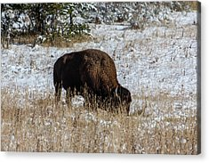 Acrylic Print featuring the photograph Bison In The Snow by Pete Federico