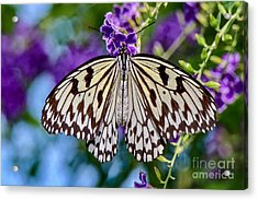 Black And White Paper Kite Butterfly Acrylic Print