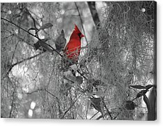 Black And White With A Splash Of Color Acrylic Print