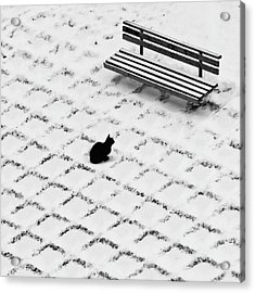 Black Cat Contemplating Bench Acrylic Print by Photo By Marianna Armata