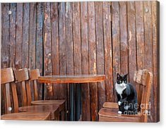 Black Cat Sitting On Chair In Outdoor Acrylic Print