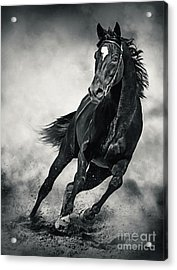 Acrylic Print featuring the photograph Black Horse Running Wild Black And White by Dimitar Hristov