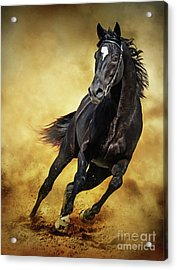 Acrylic Print featuring the photograph Black Horse Running Wild by Dimitar Hristov