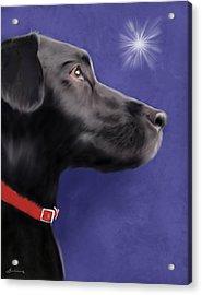 Black Labrador Retriever - Wish Upon A Star  Acrylic Print