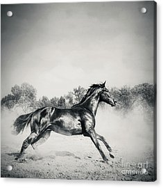 Acrylic Print featuring the photograph Black Stallion Horse by Dimitar Hristov