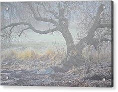 Acrylic Print featuring the photograph Blanket Of Fog by Randi Grace Nilsberg