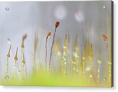 Blooming Moss Acrylic Print