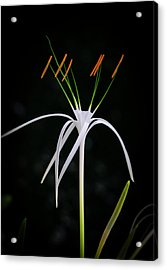 Blooming Poetry 3 Acrylic Print
