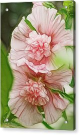 Blossoming Hollyhock Flowers In A Acrylic Print by Maria Mosolova