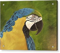 Blue And Gold Mccaw Acrylic Print