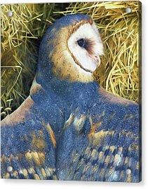 Blue Barn Owl Acrylic Print