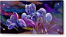 Blue Bloom Acrylic Print