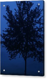 Blue Cherry Tree Acrylic Print