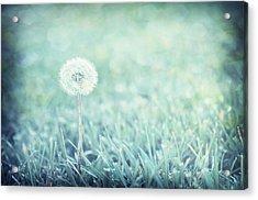 Blue Dandelion Acrylic Print